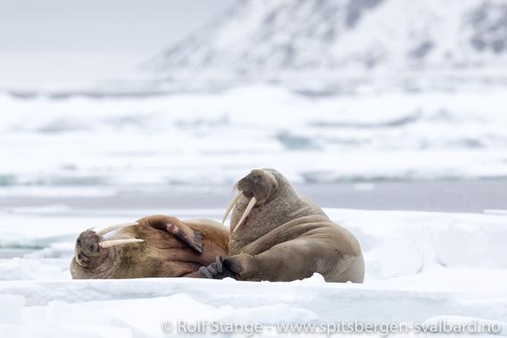 Arktiske seilturer - bildesamlinger, fortellinger og dagbøker