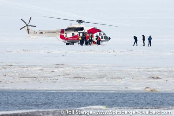 Polar bear, Adventdalen