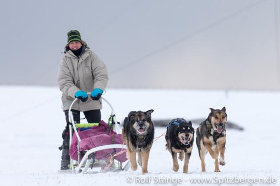 Mit Schlittenhunden auf Tour bei Longyearbyen