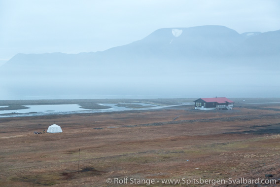 Man killed by polar bear at Longyearbyen camping