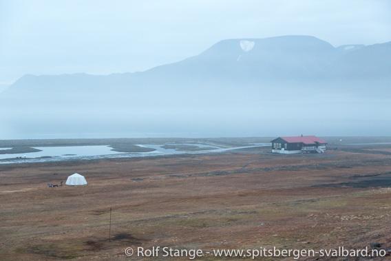 Mann drept av isbjørn på Longyearbyen camping