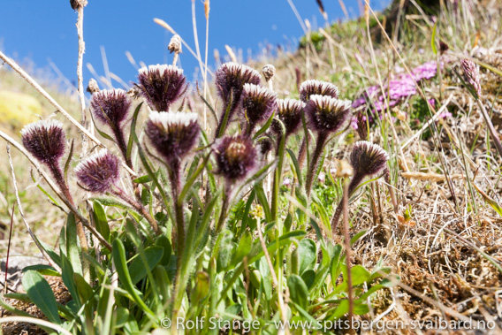 Blomster, Fjortende Julibukta