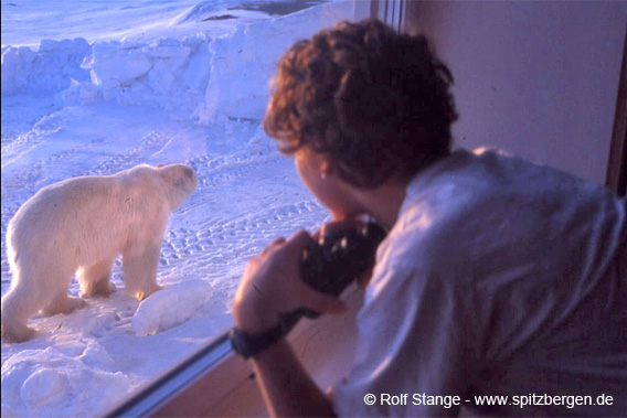 Eisbär, Kapp Linné