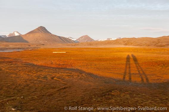 Salt marsh tundra Tundra