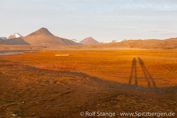 Salzwiesenartige Tundra