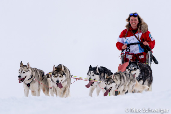 Trappers Trail: hundesledeløp, Longyearbyen Hundeklubb