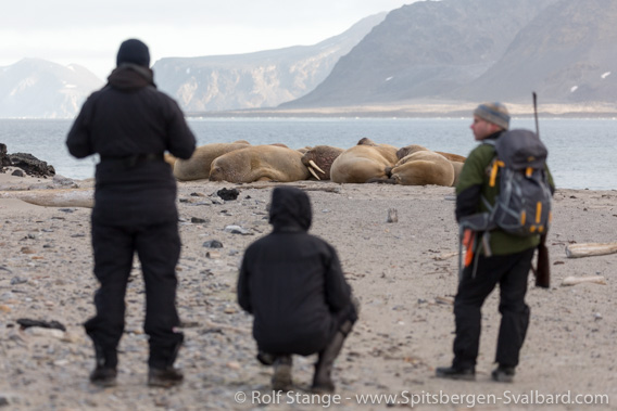 Guide, tourists and walrusee in Spitsbergen