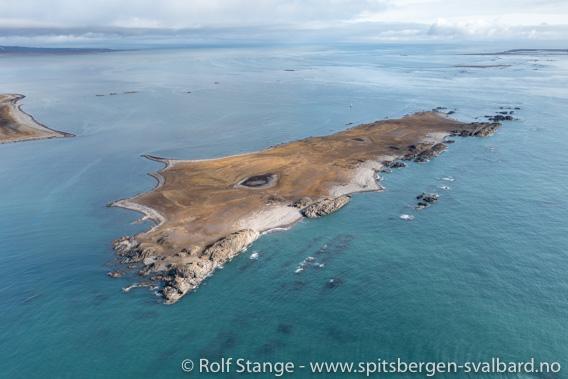 Tokrossøya