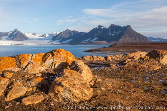 Lichens, Hermansenøya