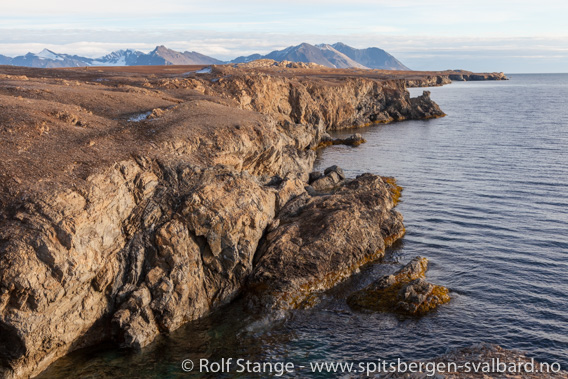 Klippekyster, Hermansenøya